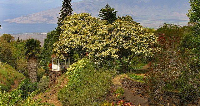 kula botanical gardens in hawaii