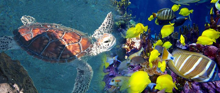 Hawaii Aquarium